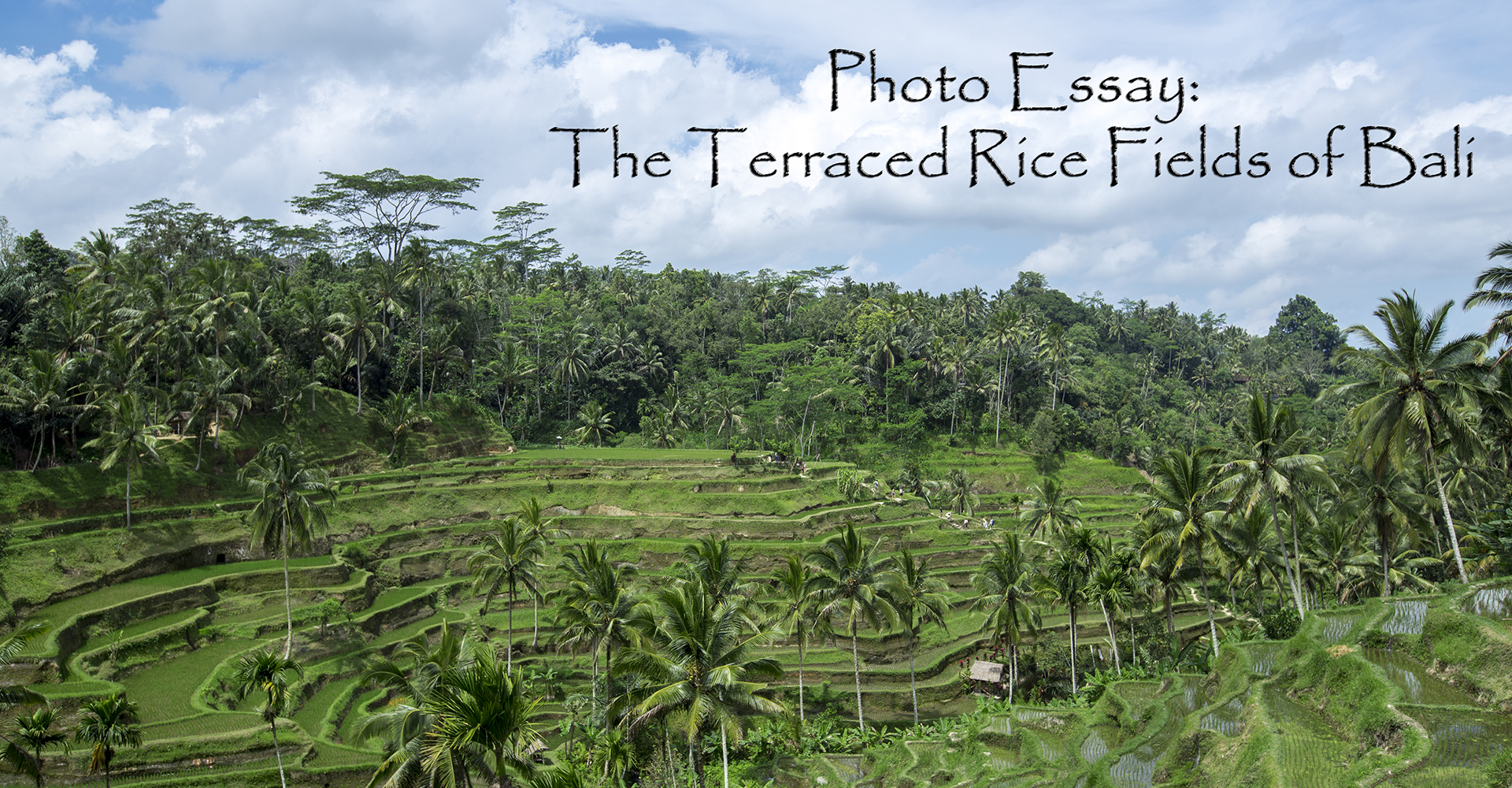 rice essay photo essay the terraced rice fields of bali photo essay the terraced rice fields of bali